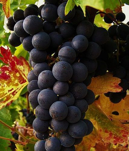 vigne Galineau propriétaire récoltant bordeaux supérieur rouge