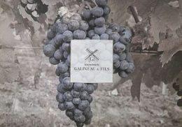 vignoble Galineau propriétaire récoltant bordeaux