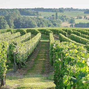 vue sur les vignes vignoble Galineau propriétaire récoltant bordeaux supérieur rouge